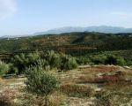 Amazing plot in Tavronitis very close to the beach